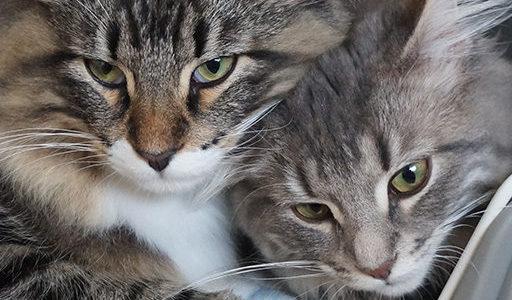 猫の顔合わせ その後の相性が決まるって本当?